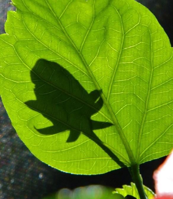 Shadow Blossom