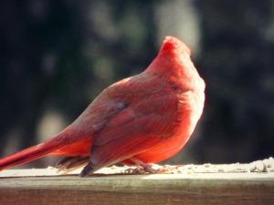 Cardinalfeb20th2013 030